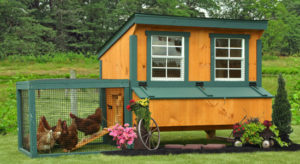 lean-to-chicken-coop